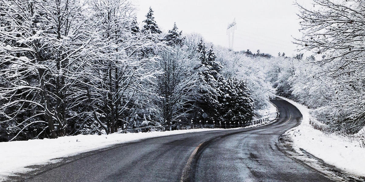Winter Road with Trees