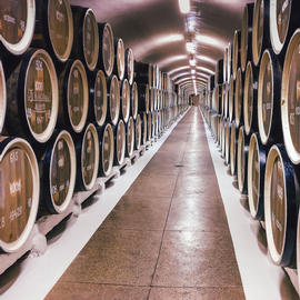 wine barrels lined up in a wine cellar